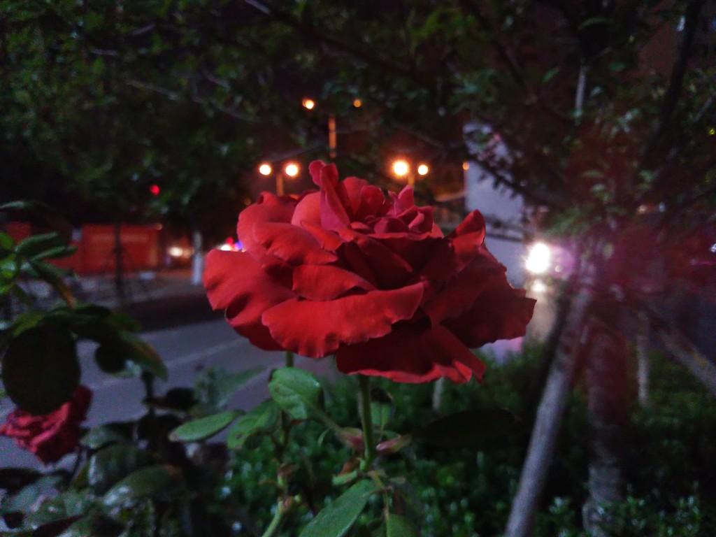夜景(坚果)