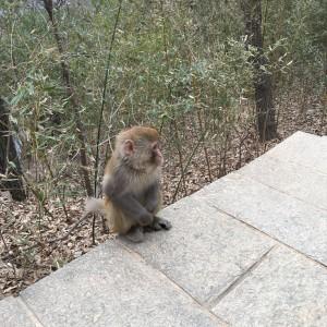 花果山的猴子