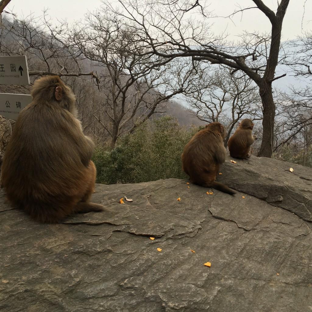 花果山猴子