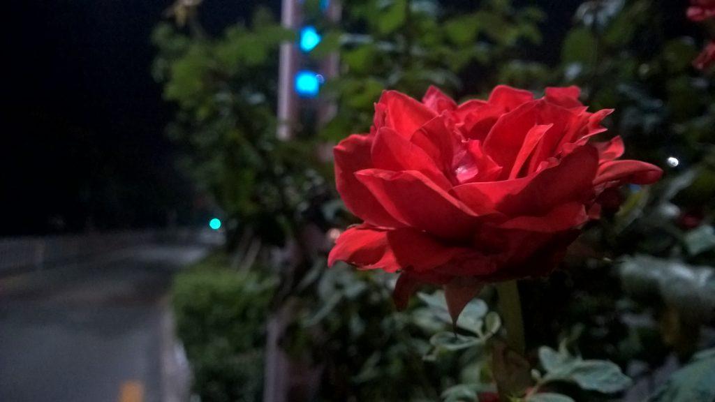 Lumia 930夜间样张