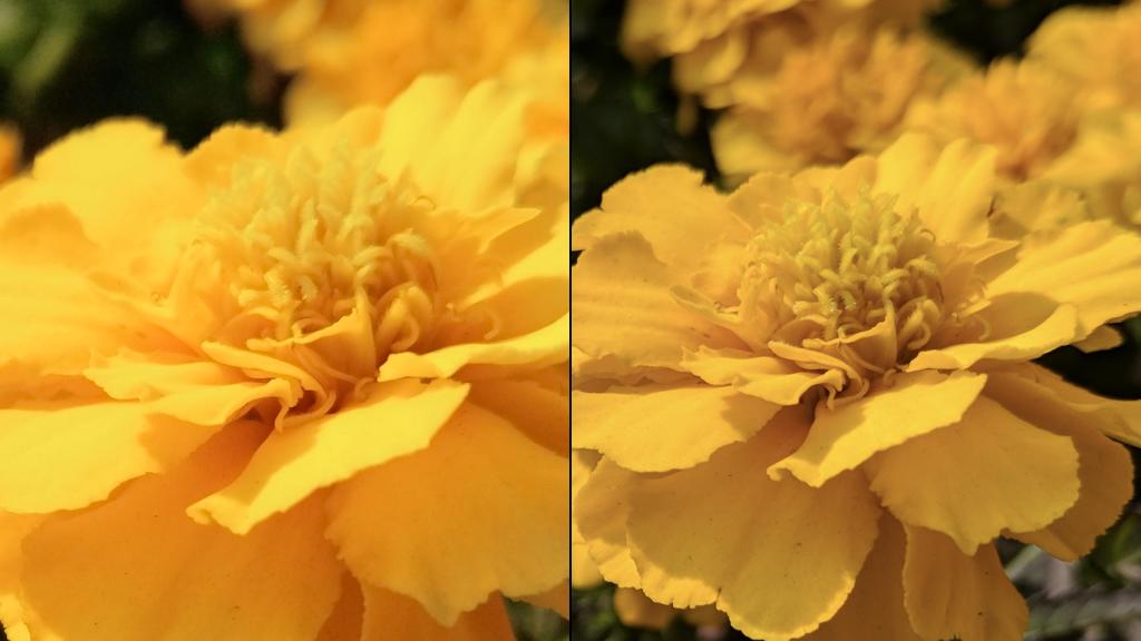 坚果Pro 2和Pixel拍照细节对比